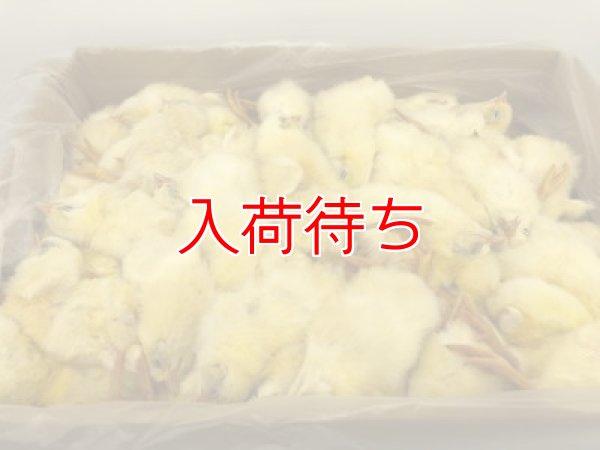 画像1: 冷凍ひよこ バラ入り 3ケース(540羽) (1)