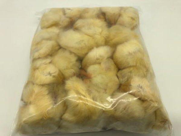 画像1: 冷凍ひよこ 20袋 (240羽) (1)